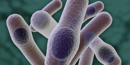 Столбняк: как можно заразиться, механизмы передачи