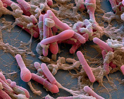 Опасные бактерии