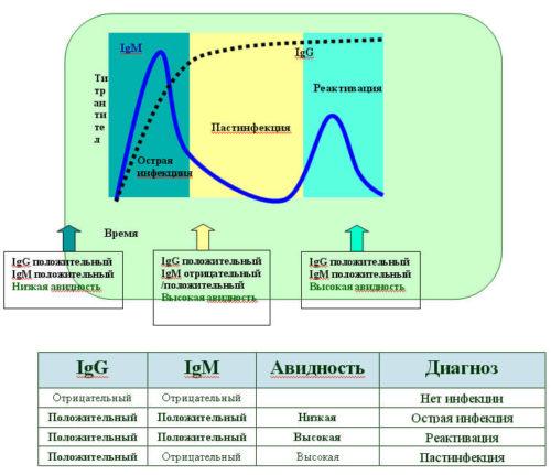 Способы определения антител и расшифровка результатов анализа