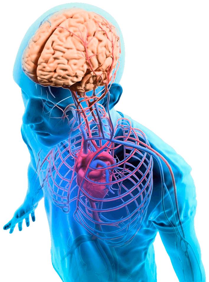 этот трон нервы человека фото своими