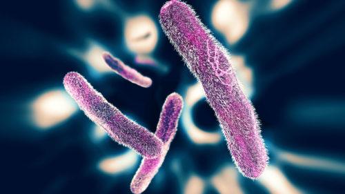 Влияние шигелл на организм чеовека