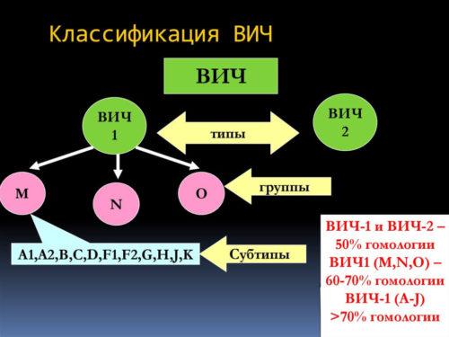 Различие структуры двух вирусов
