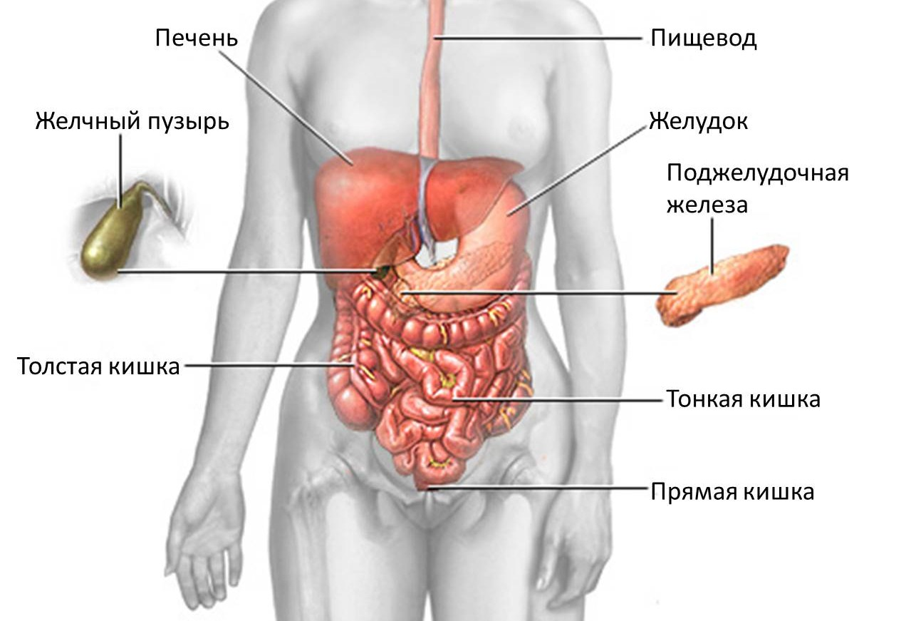 паразиты в организме лечение малышева