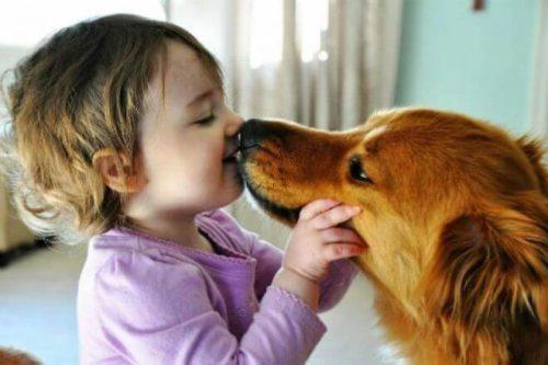 аскаридоз от собаки