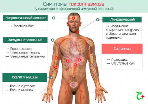 Возможные симптомы таксоплазмоза