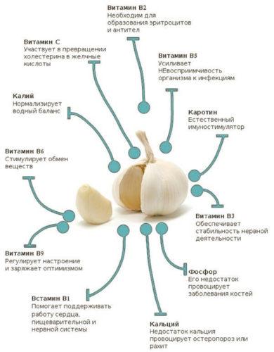витамины в составе чеснока