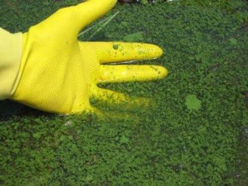 бактерии любят влагу