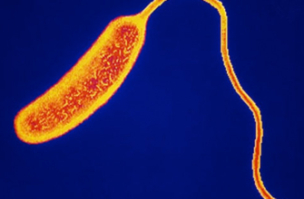 бактерия холеры