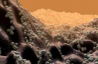 бактерии, кокки