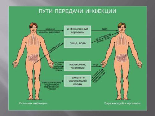 источники распространения стафилококка.