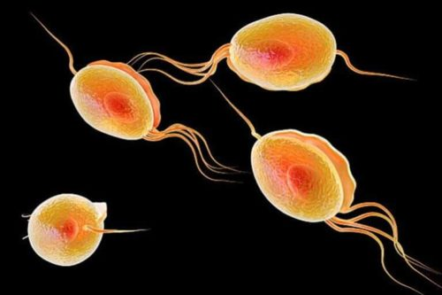 Инфекция мочеполовой системы