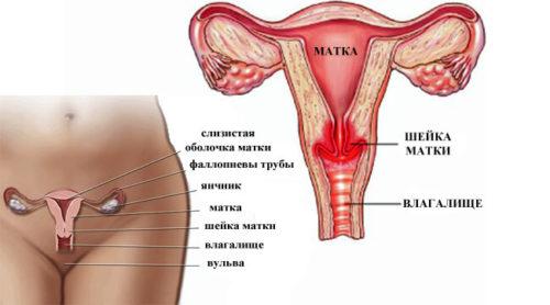 хламидиоз, хламидии, лечение