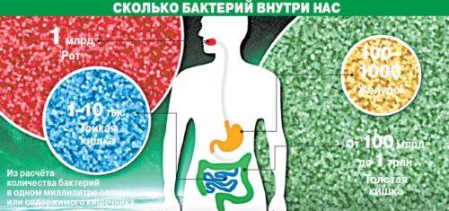 Бактерии внутри человека