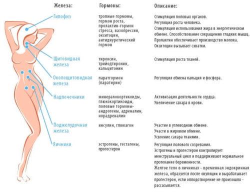названия эндокринных желез