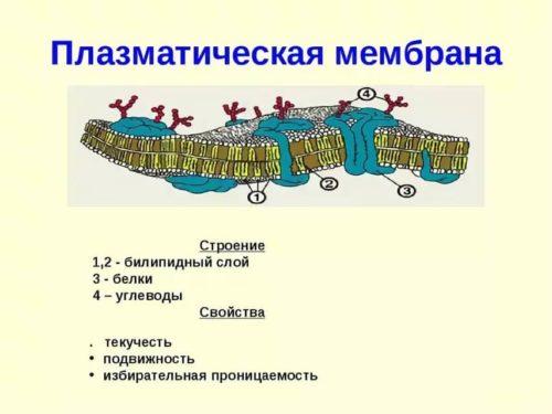 Окружение клетки бактерии