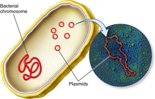 Генетические образования клетки