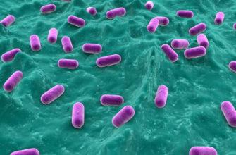 Польза плохих бактерий