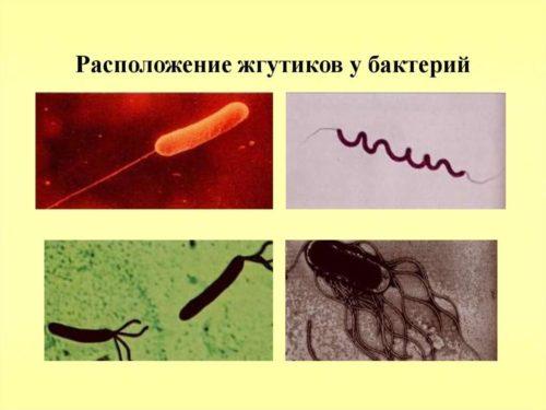 Движение бактериальной клетки