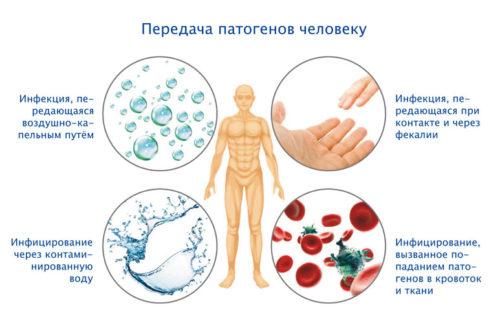 пути заражения вредоносными бактериями