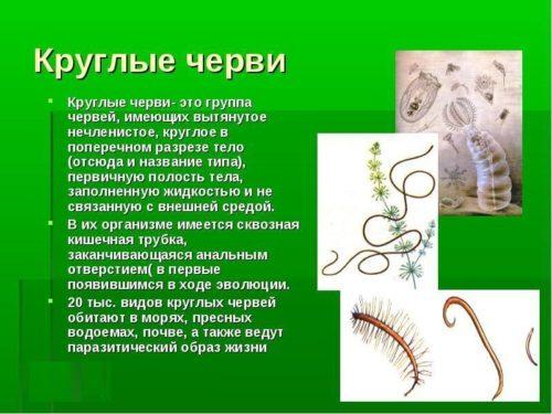 группа круглых червей